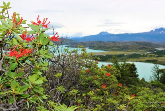 Torres del Paine – Photogallery