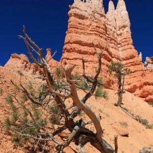 Parchi USA - Bryce Canyon